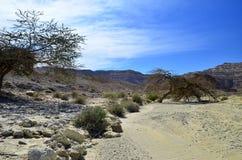река negev Израиля пустыни сухое Стоковое Изображение
