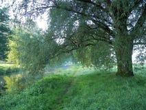 Река Niers в лете Стоковая Фотография RF