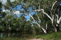 Река 1725 Nive Стоковое Изображение RF