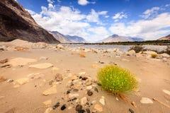 Река Nubra Стоковые Фотографии RF
