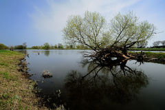 река oder Стоковое фото RF