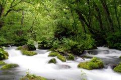 река oirase gawa Стоковые Фотографии RF