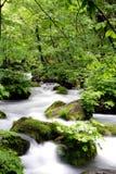 река oirase gawa Стоковая Фотография RF
