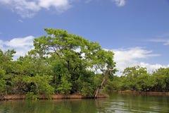 Река Orinoco стоковое фото