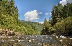река quinault сценарное Стоковые Изображения RF