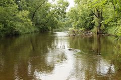 Река St Croix, лес положения Knowles губернаторов, Висконсин Стоковые Изображения