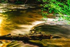 Река Tanew в золотом свете заходящего солнца Стоковая Фотография