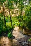 Река Tanew в свете заходящего солнца Стоковое фото RF