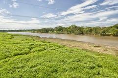 Река Tarcoles, Коста-Рика Стоковая Фотография