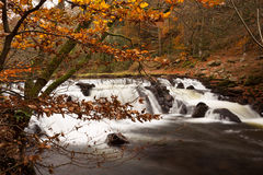 Река Teign Стоковые Изображения RF