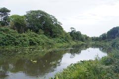 Река Tempisque тропическое Стоковое Изображение RF