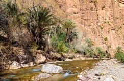 Река Todra в горах атласа Марокко Стоковое Изображение