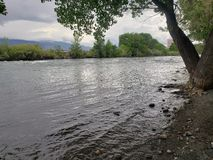 Река Truckee искрится Невада стоковые фотографии rf