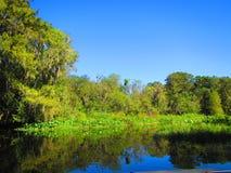 Река Withalacoochee, Инвернесс Флорида стоковое изображение rf
