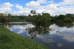 Река Yacuma Боливийские джунгли Стоковое Изображение RF