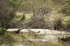 Реки в природе Стоковое Изображение