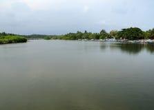 Реки и мангрова Стоковая Фотография RF