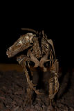 Реконструированный динозавр Стоковые Фото