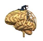 Реконструкция мозга Стоковые Изображения