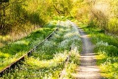 Рельсы перерастанные с зеленой травой и цветками Стоковая Фотография