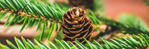 рему на ветви рождественской елки стоковые изображения rf