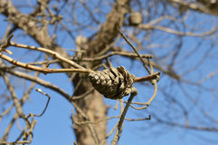 Рему на дереве Стоковая Фотография RF