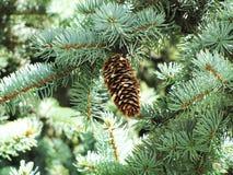 Рему на рождественской елке Стоковые Изображения RF
