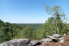 25 рему отстают цепь в лесе pignons trois стоковое фото