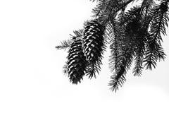 рему стоковое изображение
