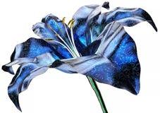 Рентгенизируйте изображение цветка изолированного на белизне, лилии иллюстрация вектора