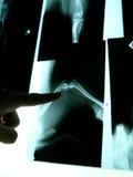 Рентгеновские снимки на ветеринаре Стоковая Фотография