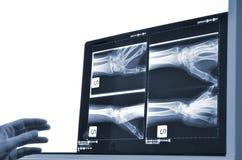 Рентгенографирование Стоковая Фотография