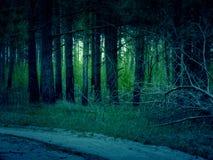 Ретро сосновый лес Стоковое Изображение