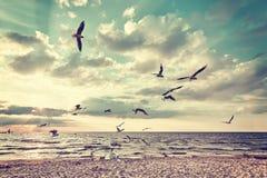 Ретро стилизованный пляж с летящими птицами на заходе солнца Стоковые Фотографии RF