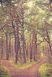 Ретро тонизированное изображение развилки в лесе Стоковая Фотография RF