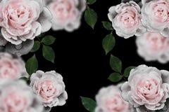 Ретро цветки, год сбора винограда цветут предпосылка Стоковое Изображение RF