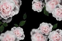 Ретро цветки, год сбора винограда цветут предпосылка Стоковая Фотография RF