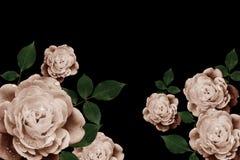 Ретро цветки, год сбора винограда цветут предпосылка Стоковые Фотографии RF