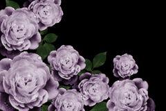 Ретро цветки, год сбора винограда цветут предпосылка Стоковые Изображения RF