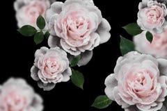 Ретро цветки, год сбора винограда цветут предпосылка Стоковое Изображение