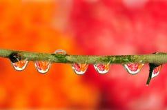 рефракция dewdrop стоковое изображение