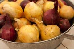 Рецепты еды сбора лука в августе Стоковая Фотография RF