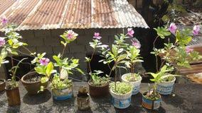рециркулируйте сад Стоковые Фото