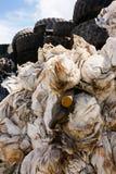 Рециркулирующ отход - изображение запаса Стоковые Фотографии RF