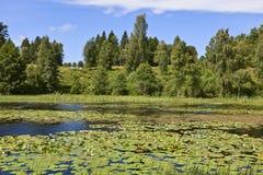 речная вода лилии Стоковое Изображение