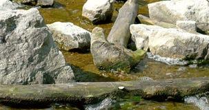Речная вода бежать через камни акции видеоматериалы