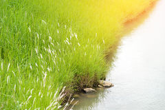 Речной берег канала водного пути Стоковое Фото