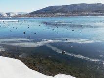 Речной берег покрытый с льдом и камнями стоковая фотография