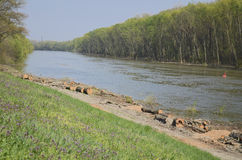 Речной берег после деревянного вырезывания Стоковое фото RF