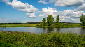 Речной берег с вегетацией в дне лета солнечном стоковое изображение rf